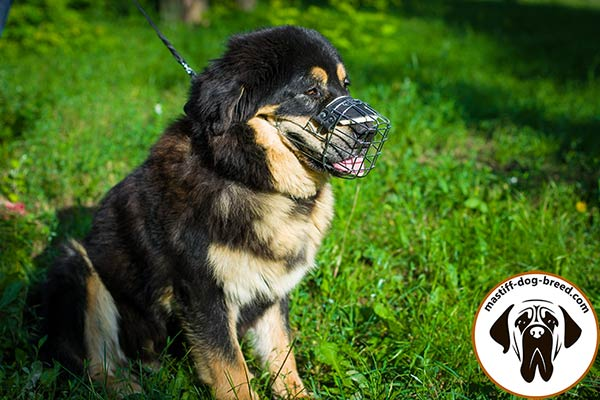 Safe and reliable metal cage dog muzzle for Mastiff