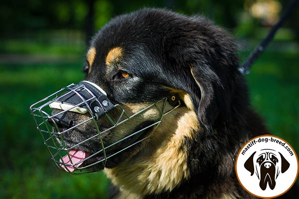 Wire cage Mastiff muzzle with padded nose part