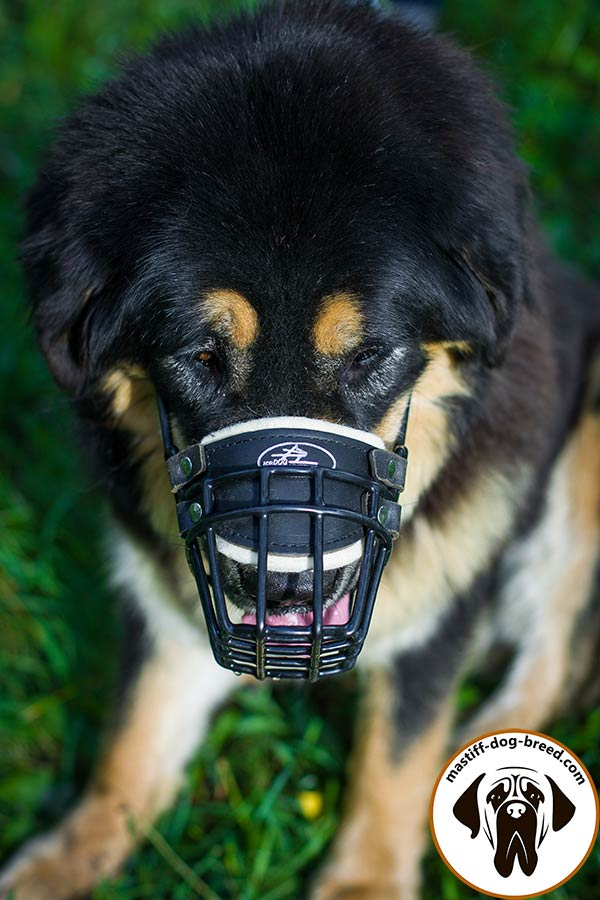Thoroughly stitched and riveted wire cage dog muzzle for Mastiff